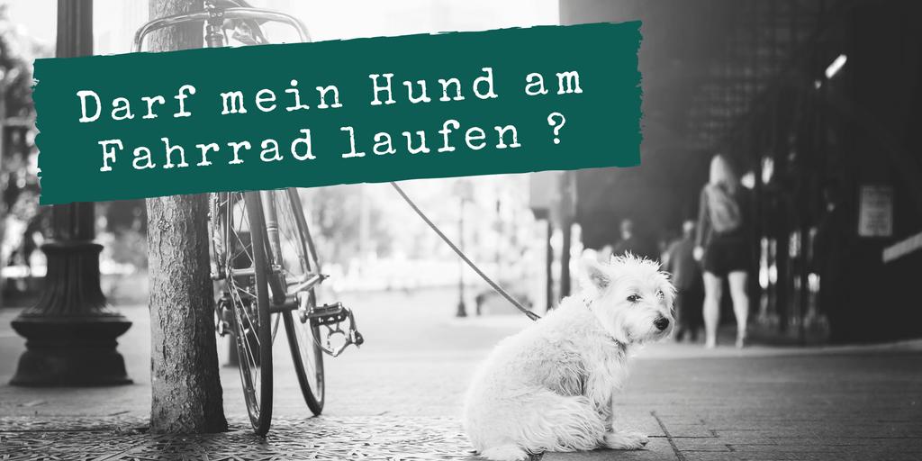 Weiterer Artikel - darf mein Hund am Fahrrad laufen