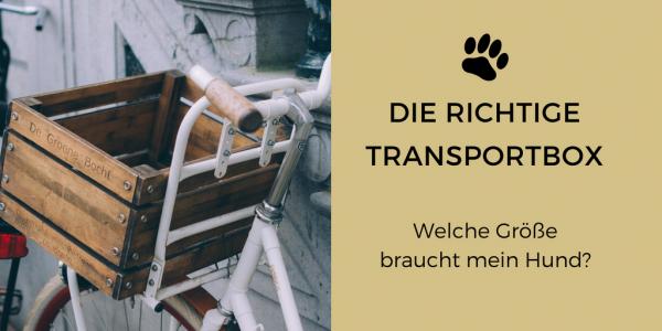 Link zu: Die richtige Transportbox