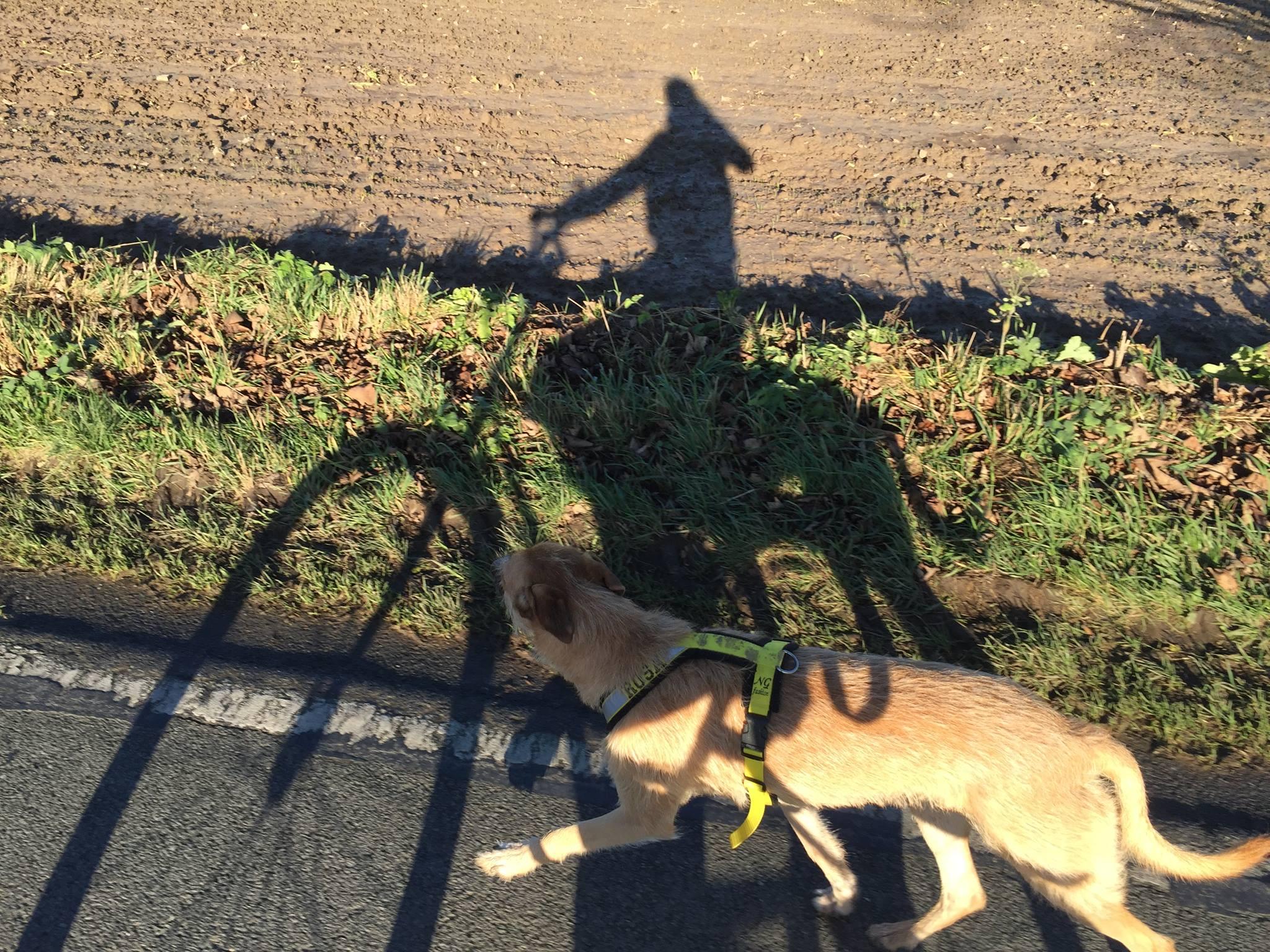 Hund läuft am Fahrrad Fahrradtour mit Hund