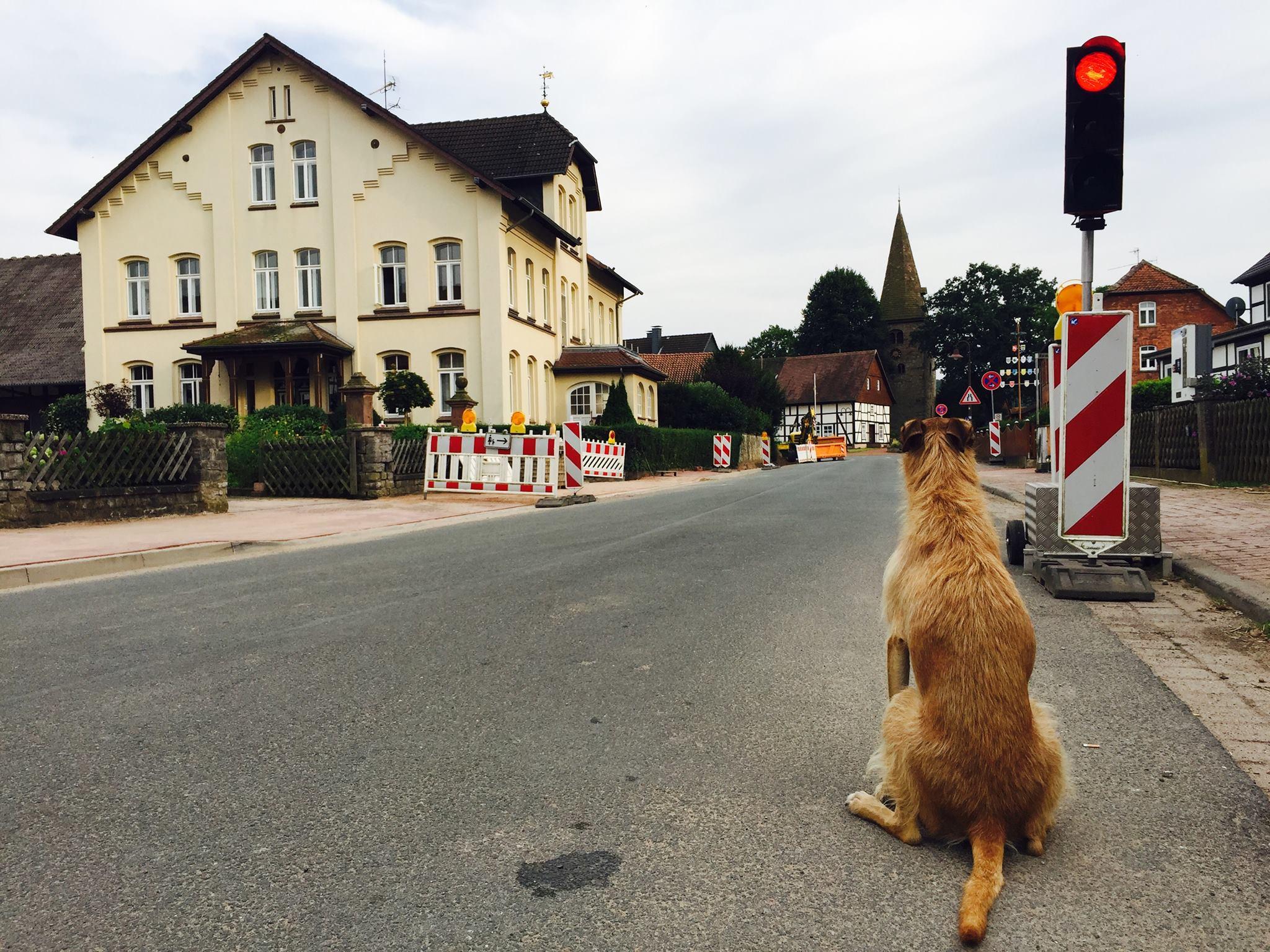 Fahrradtour mit Hund Erfahrungsbericht