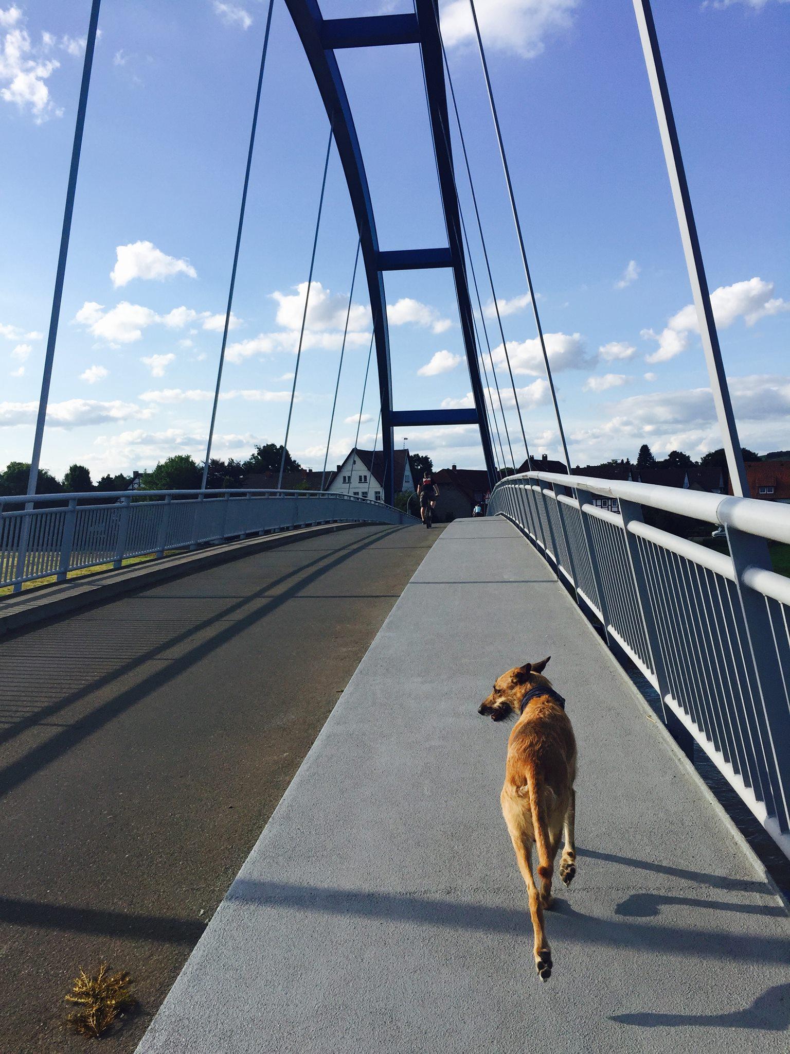 Fahrradfahren mit Hund läuft frei am Fahrrad Fahrradtour mit Hund