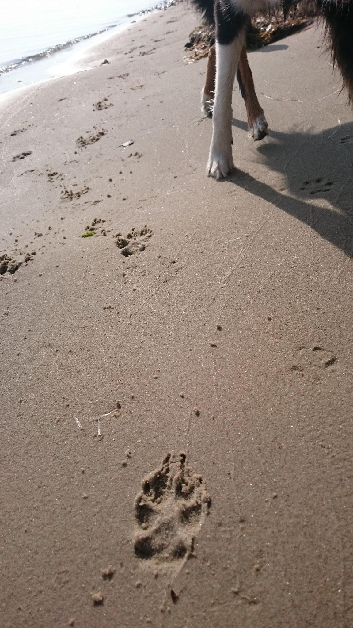 Hundepfote Pfotenschutz Hund
