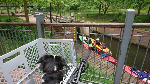 Hund im Fahrradkorb beobachtet eine Schleuse mit Kanufahrern