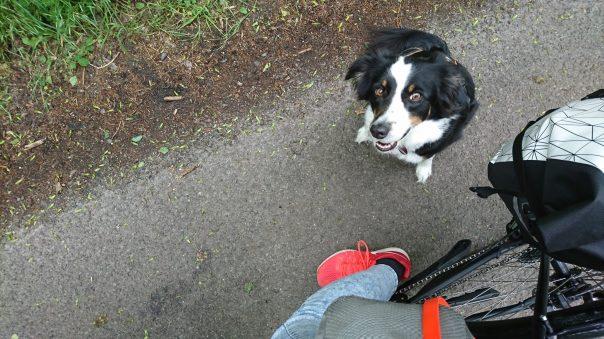 Hund neben Fahrrad
