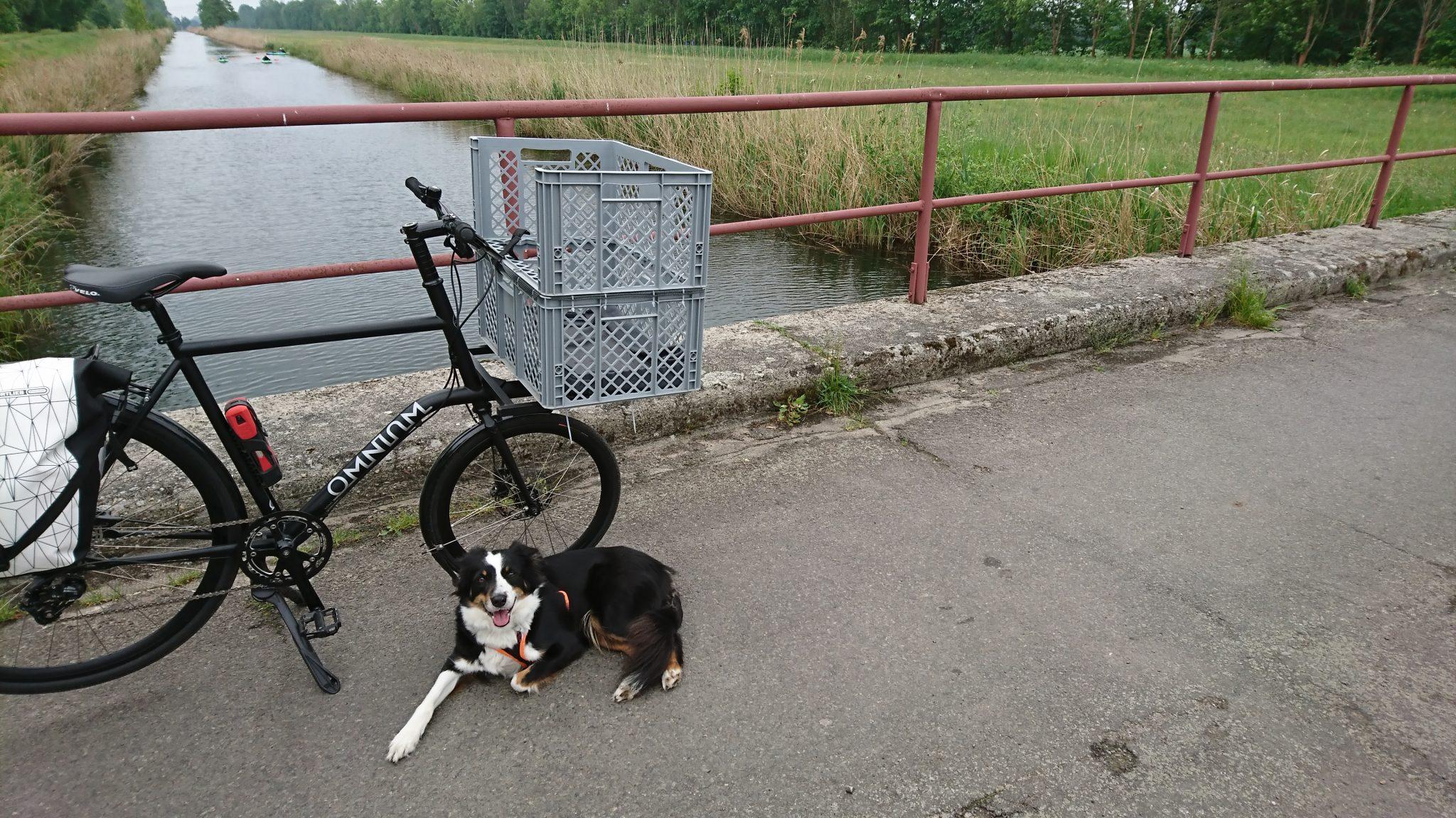 Hund liegt neben dem Fahrrad auf der Brücke am Fluss