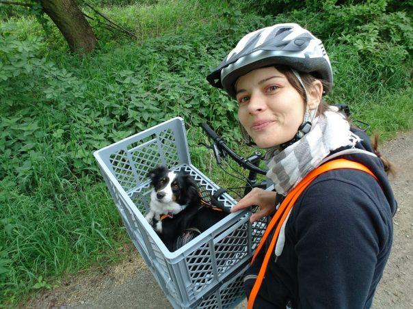 Hund im Fahrradkorb auf dem Waldweg