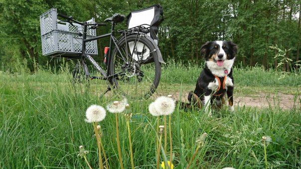 Heaven sitzt auf dem Feldweg neben dem Fahrrad