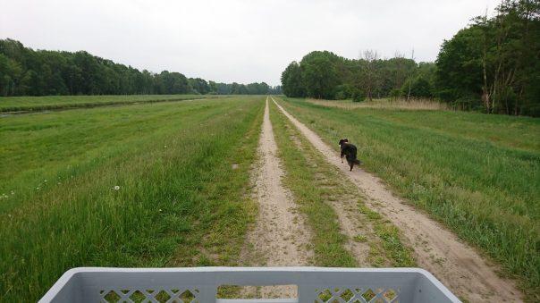 Hund läuft auf Feldweg vor dem Fahrrad mit Hundekorb