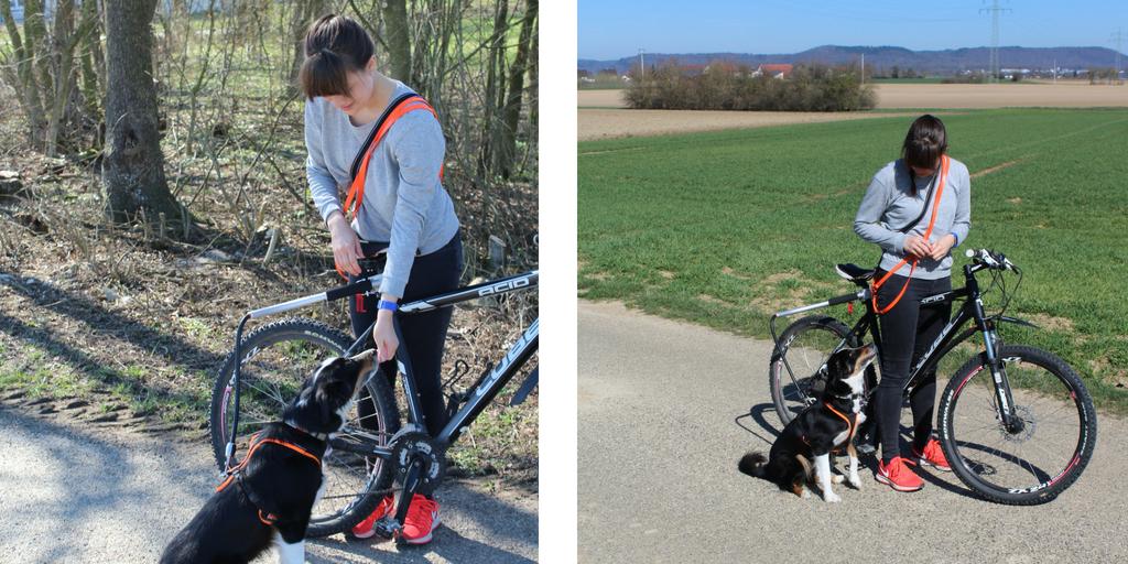 Leckerlis beim Hundetraining zum Laufen am der Fahrradhalterung