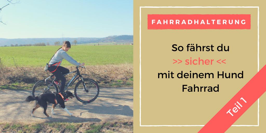 Vorschaubild Training Vorteile einer Fahrradhalterung