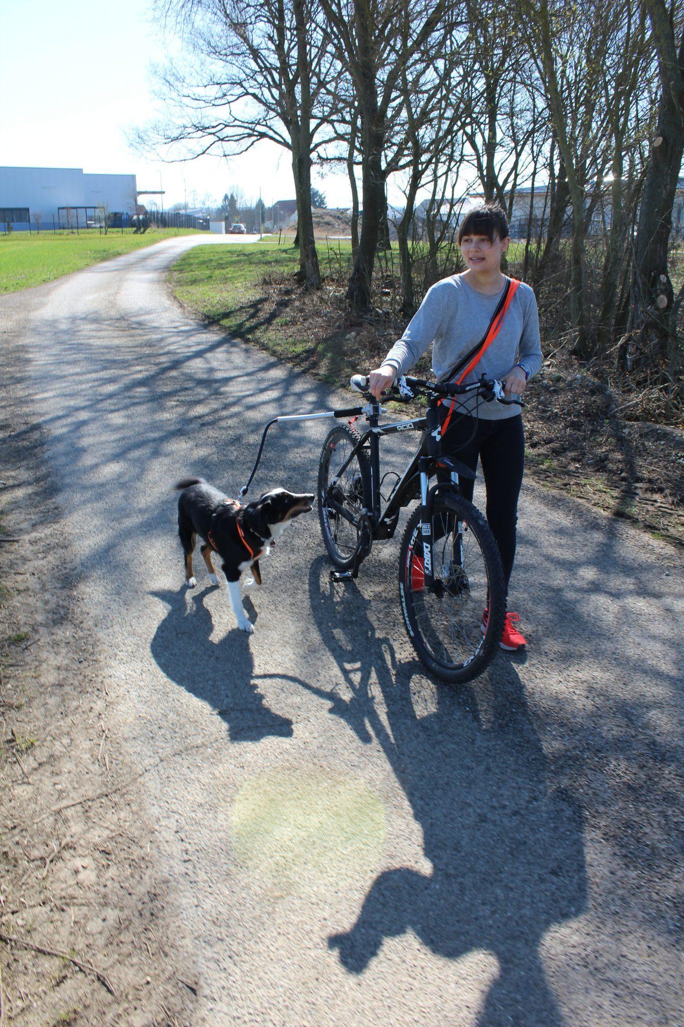 Hund läuft beim Hundetraining neben dem Fahrrad an der Fahrradhalterung