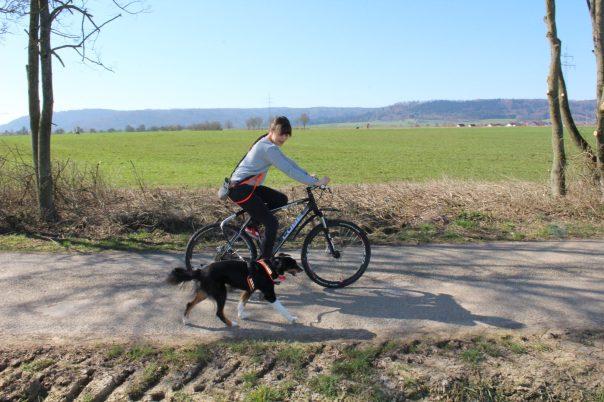 Hund am Fahrrad führen mit Fahrradhalterung