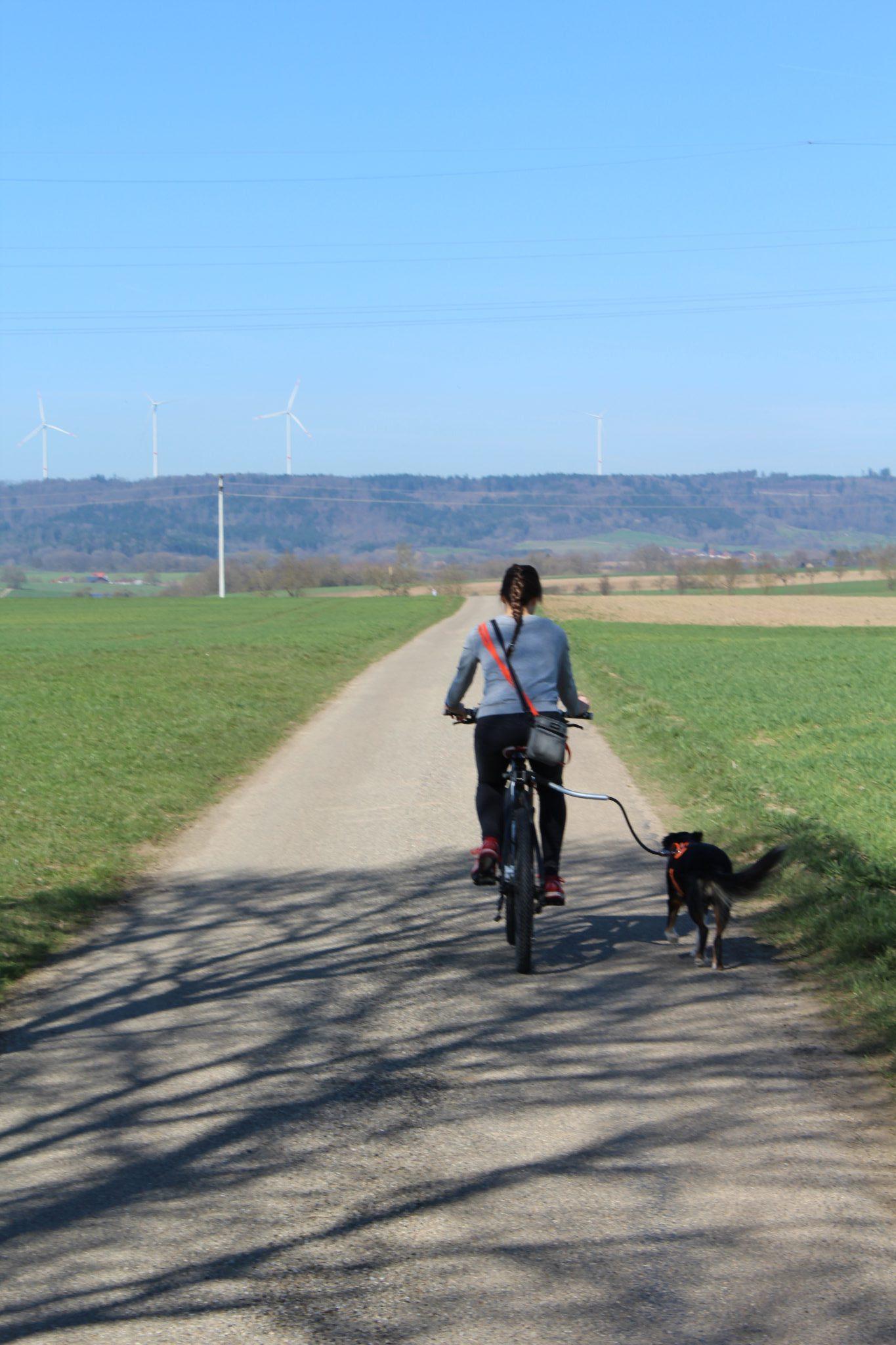 Hund läuft an der Fahrradhalterung neben dem Fahrrad auf einem Radweg