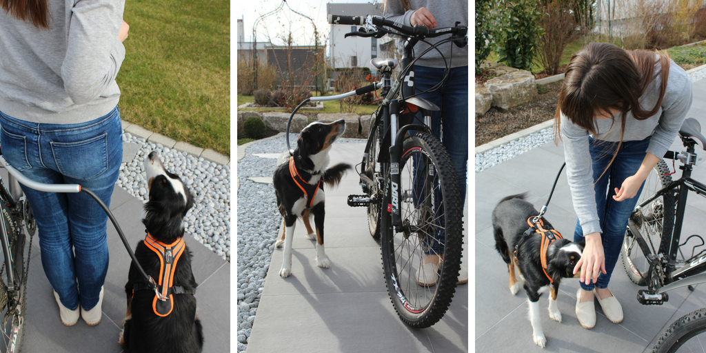 Training-Fahrradhalterung-Hund-Gewöhnung