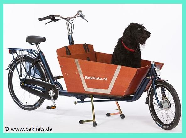 Bakfiets Hundetransport Transportkiste