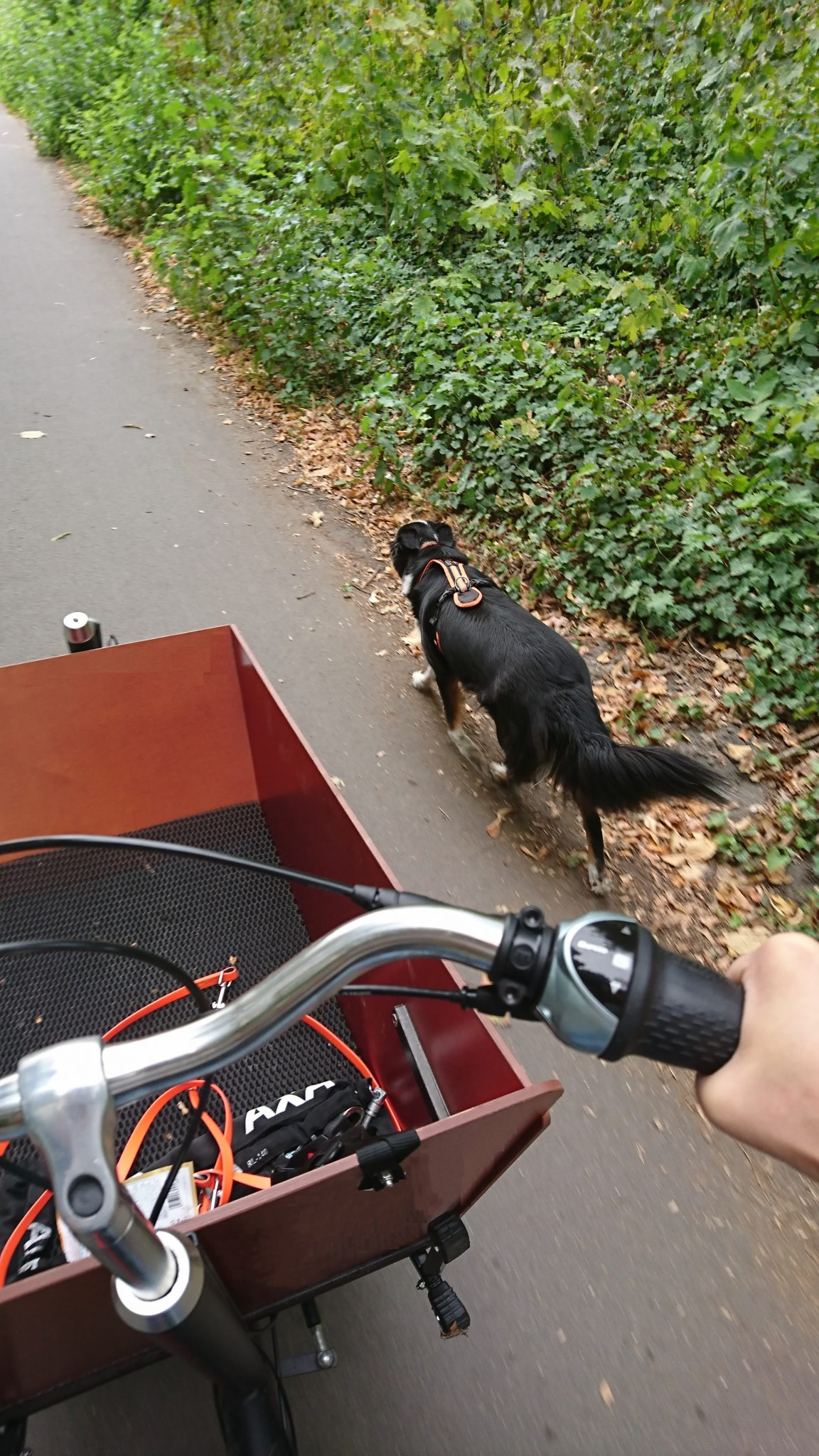 Bakfiets Lastenrad mit Hund