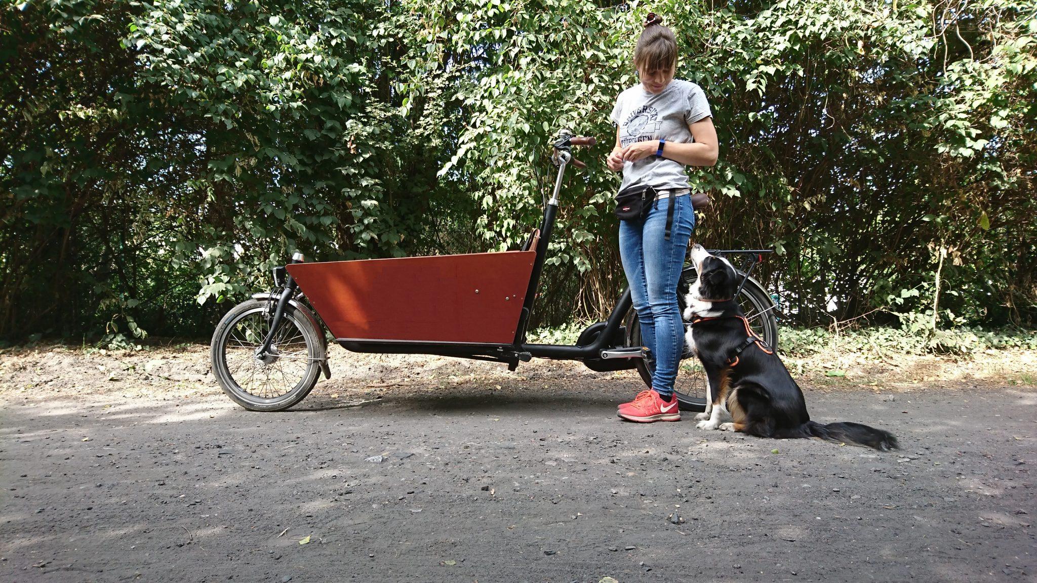 Bakfiets Lastenrad Hundetraining