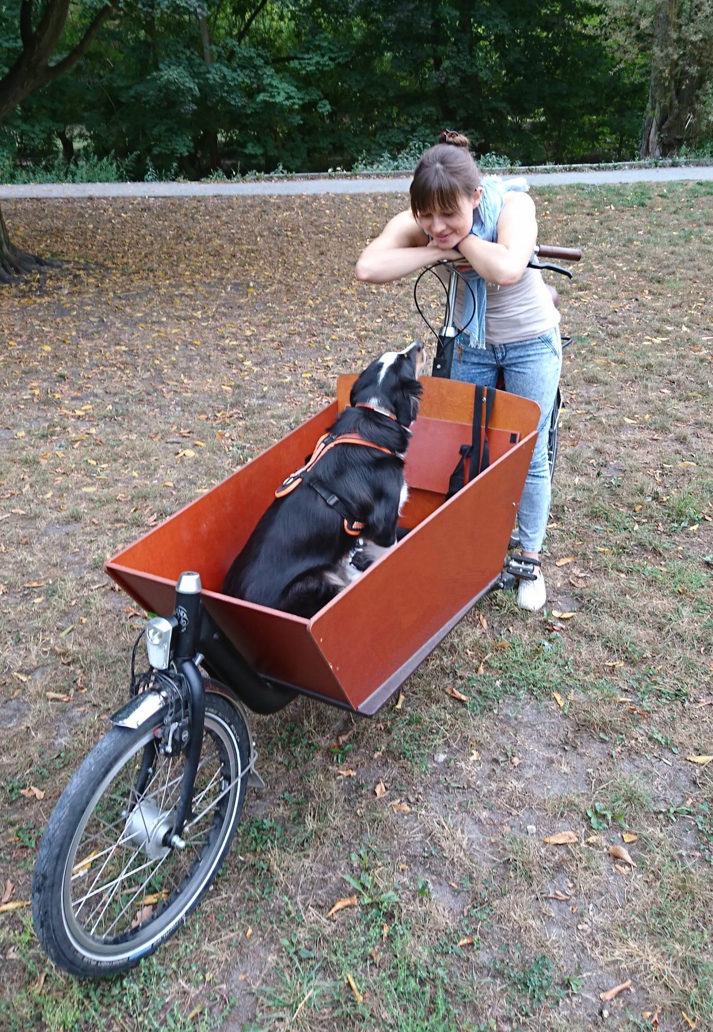 Bakfiets_Lastenrad mit Hund in der Transportkiste