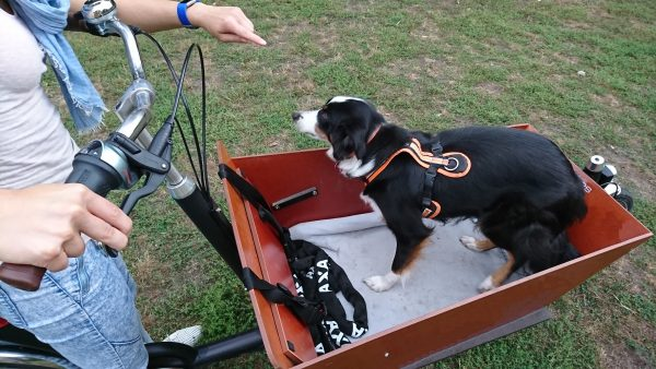 Bakfiets Lastenrad Hund springt aus Transportkiste