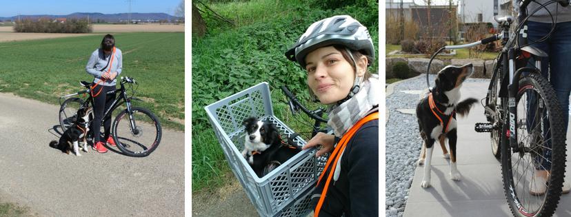 Fahrradfahren mit Hund ueber uns Titelbild