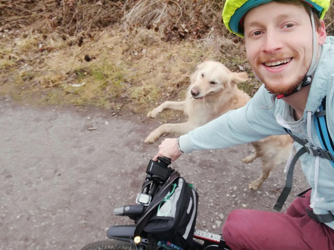 Golden Retriever Woody am Fahrrad