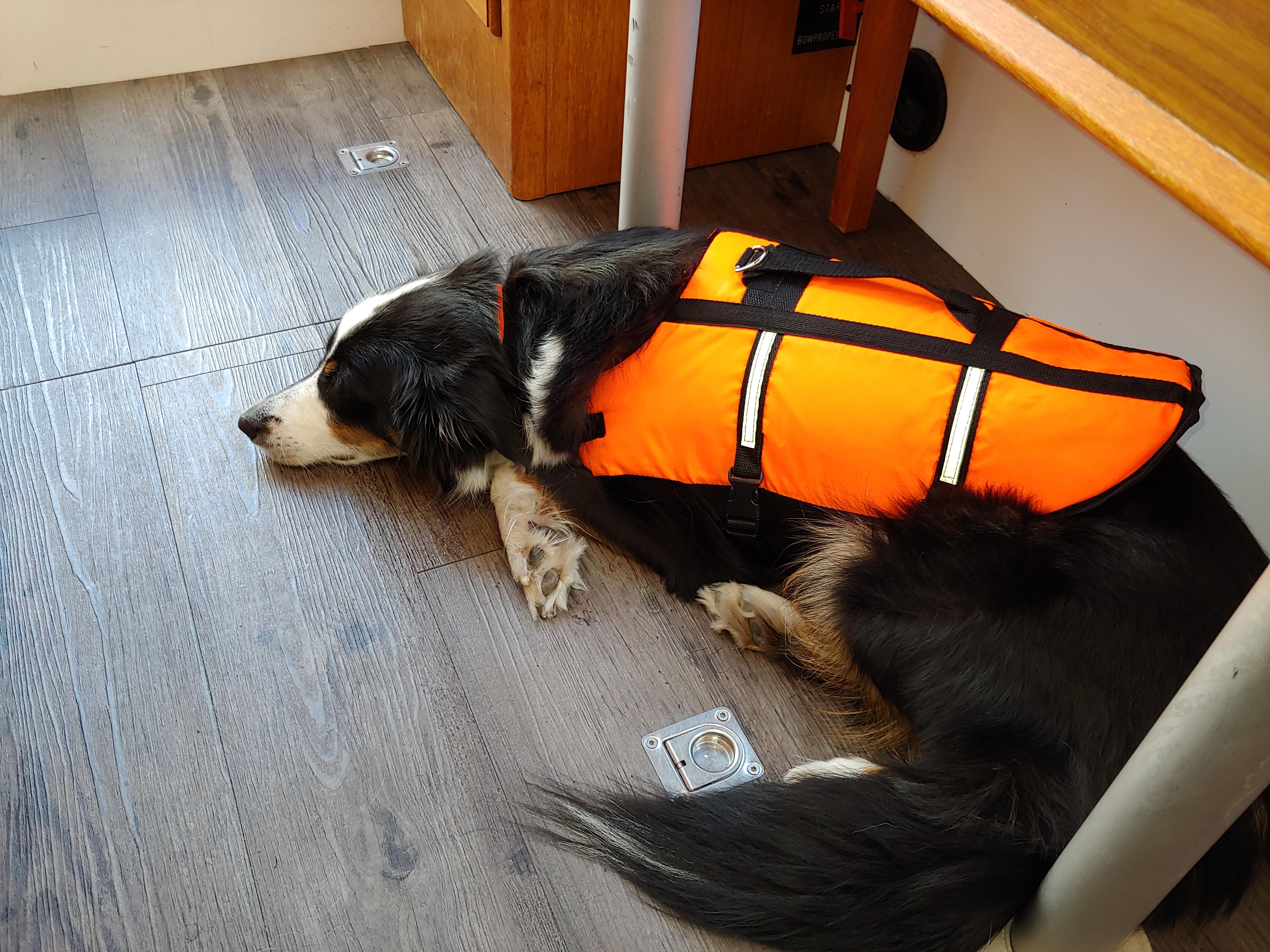 Hund entspannt auf dem Boot
