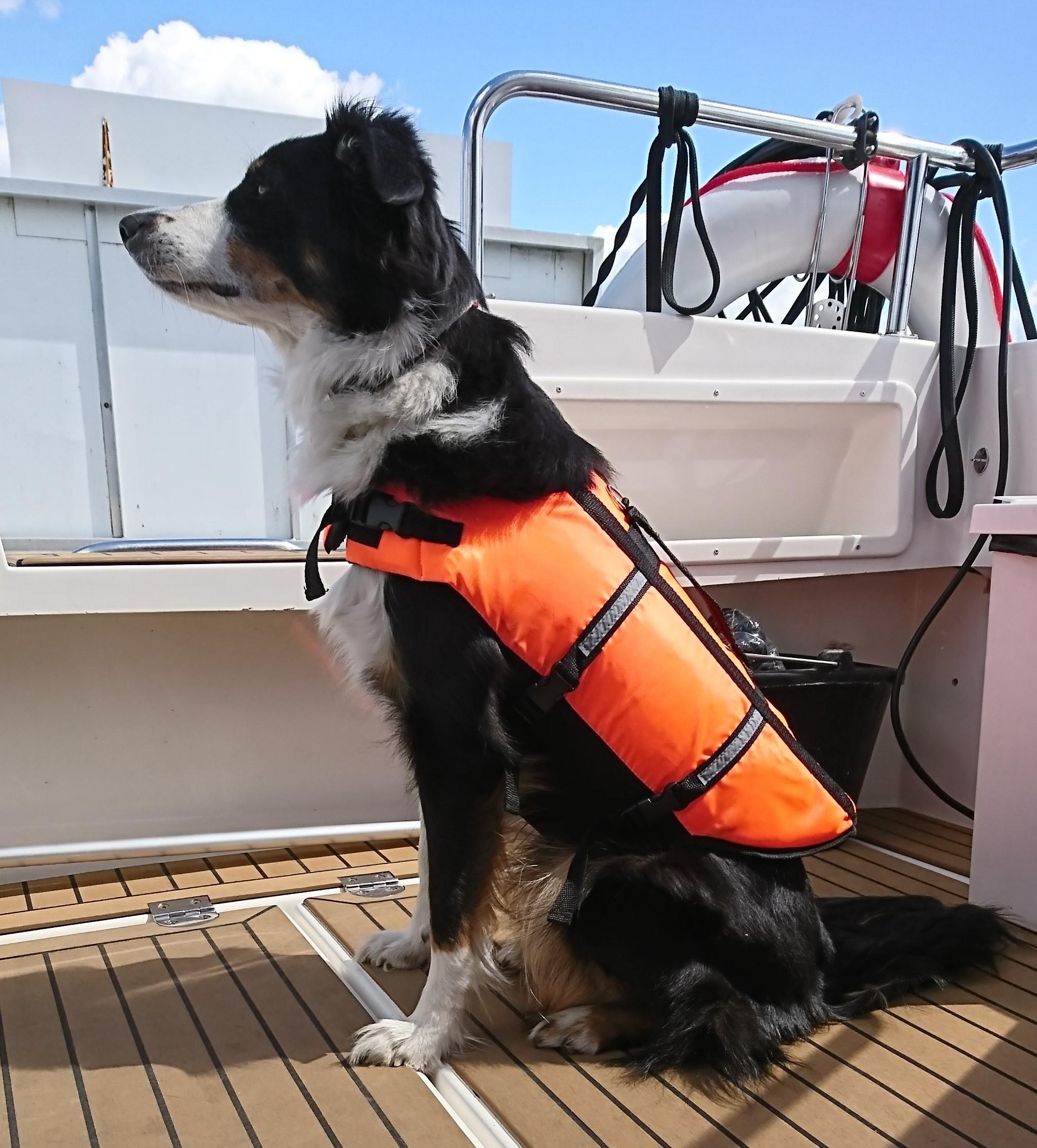 Heaven testet die PoppyPet Schwimmweste Hund