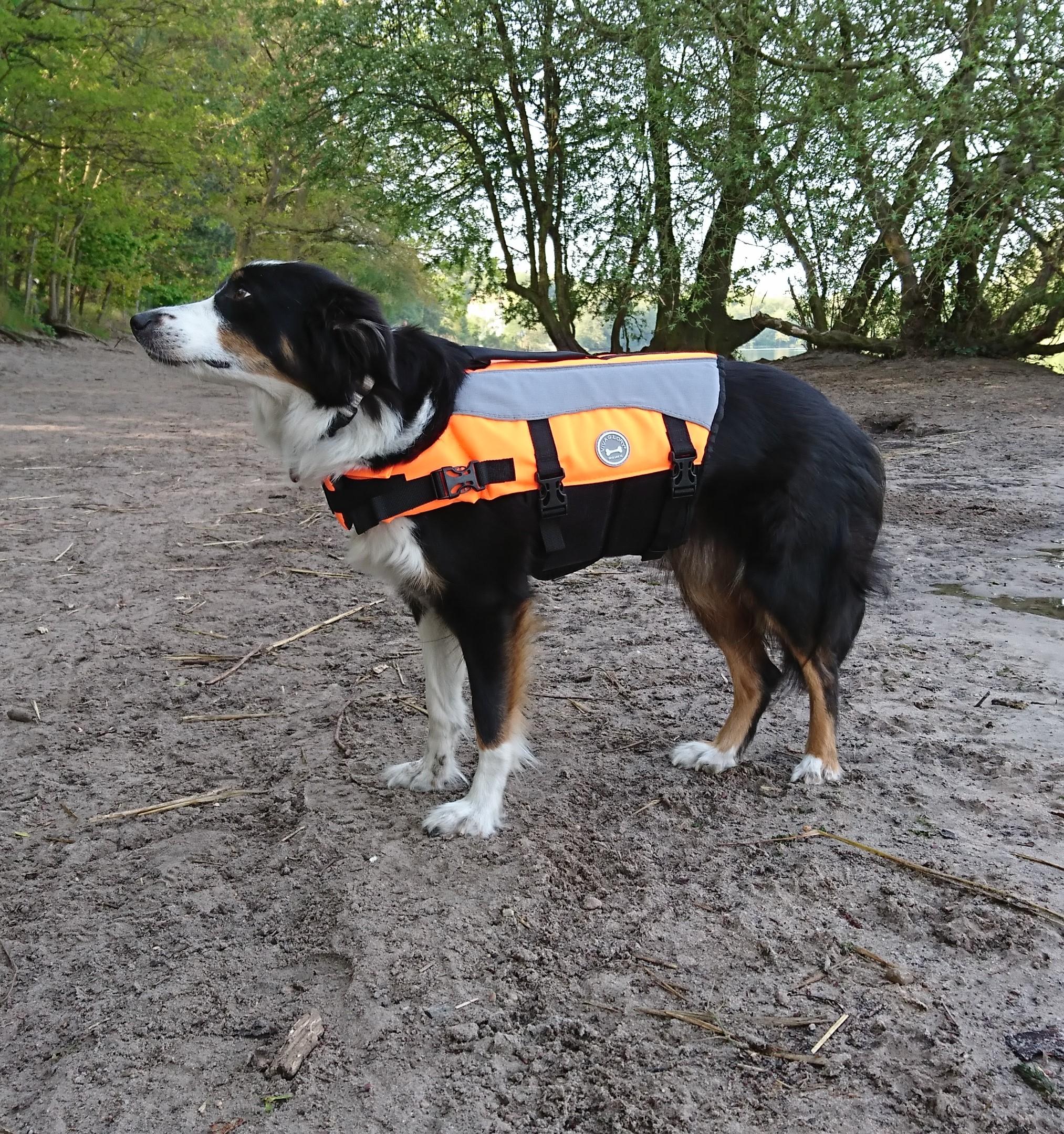 Heaven testet die Vivaglory Schwimmweste Hund
