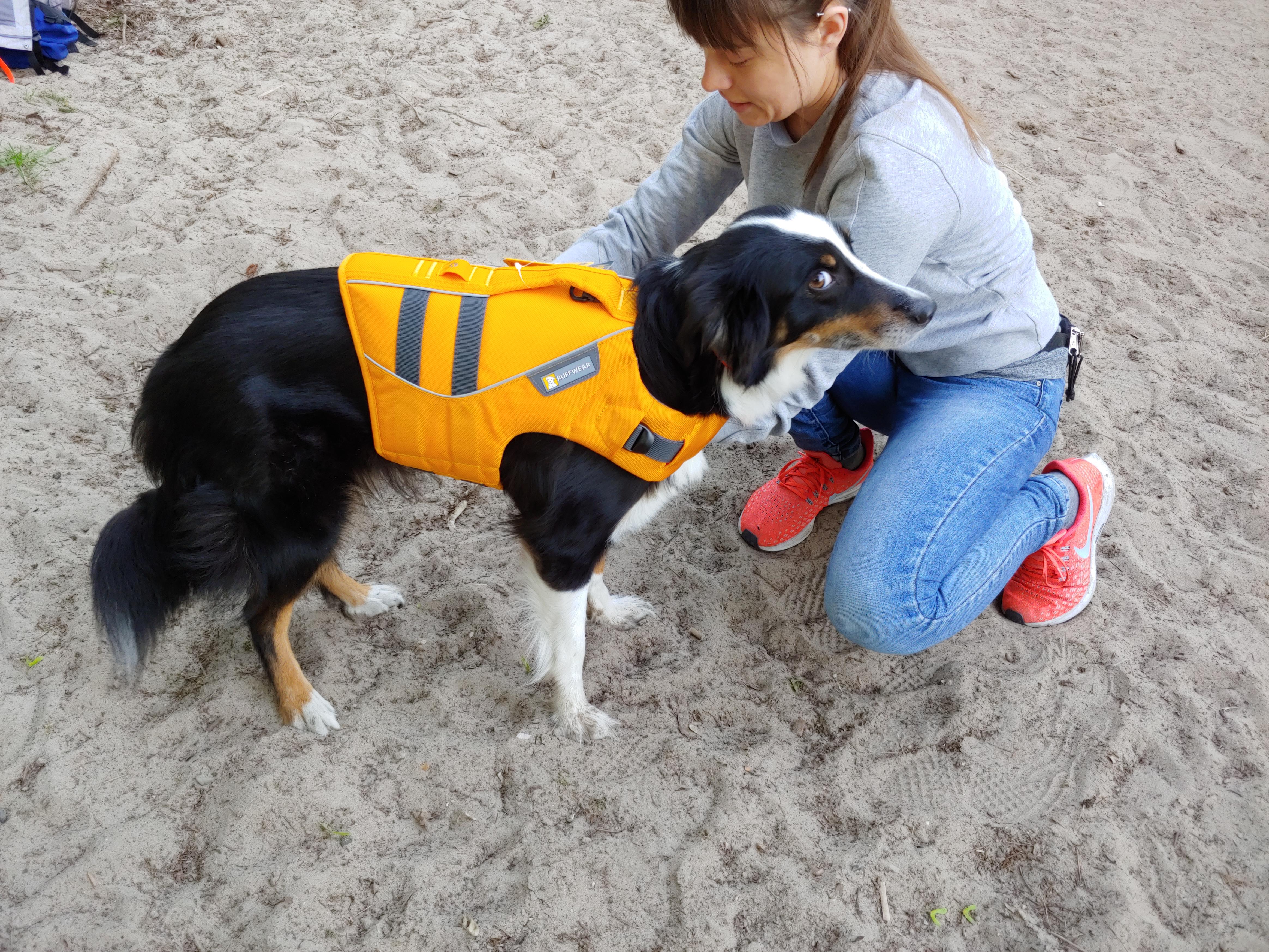 Hund-wird-an-eine-Schwimmweste-gewöhnt