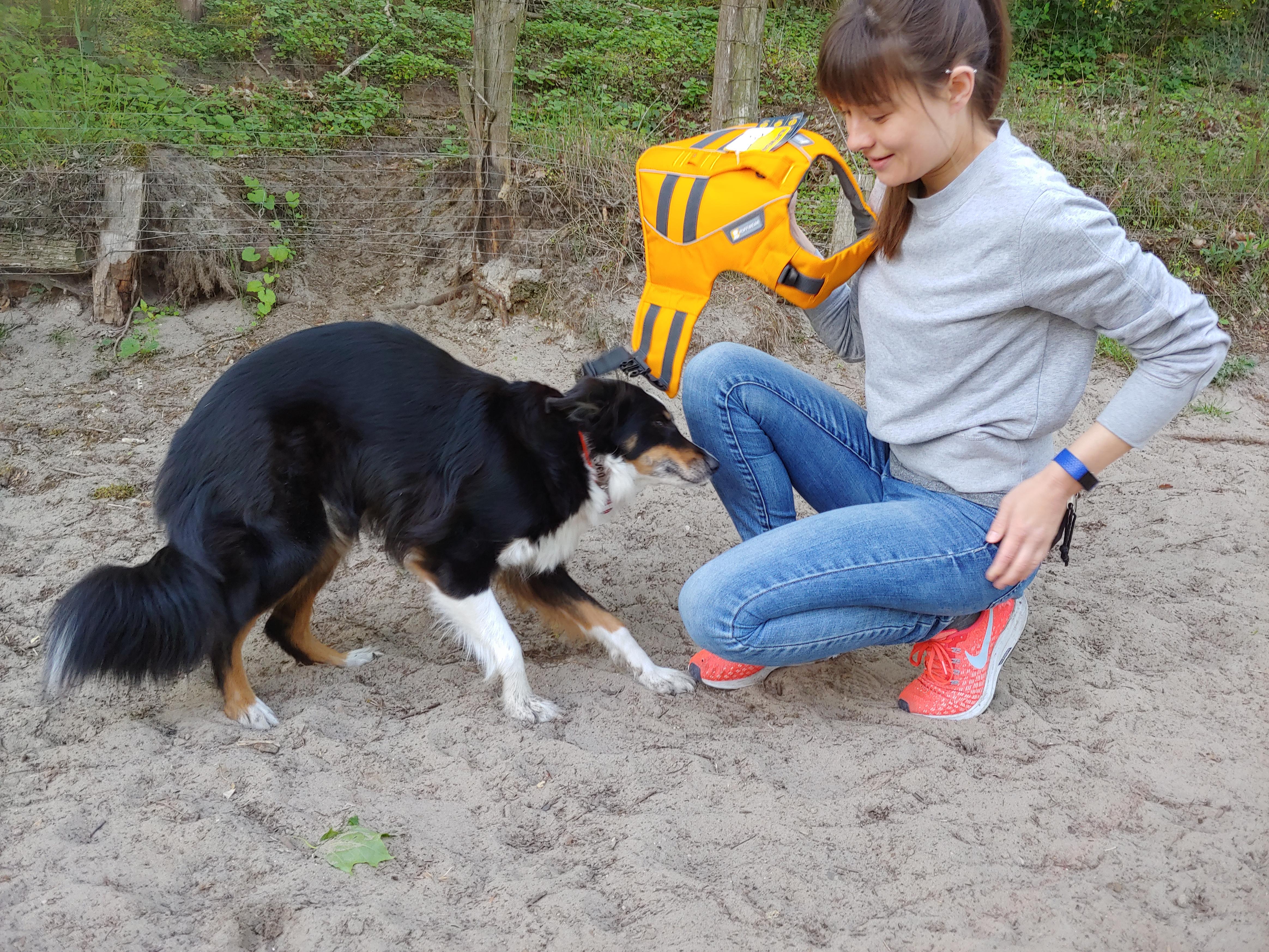 Hund-Gewöhnung-an-Schwimmweste