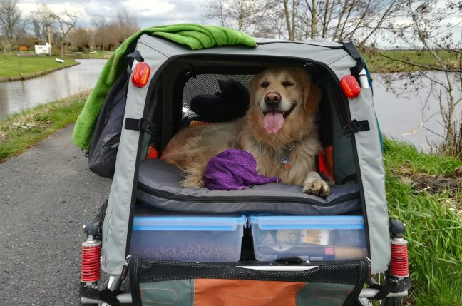 Hund Woody im Fahrradanhaenger