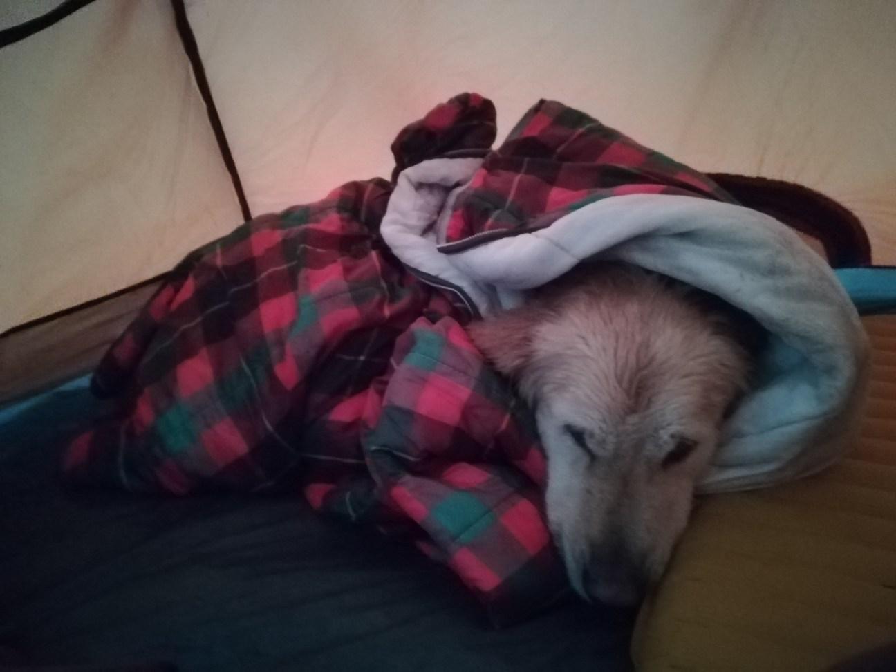Hund Woody im Schlafsack