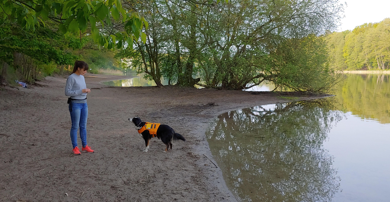 Hund mit Schwimmweste am Wasser