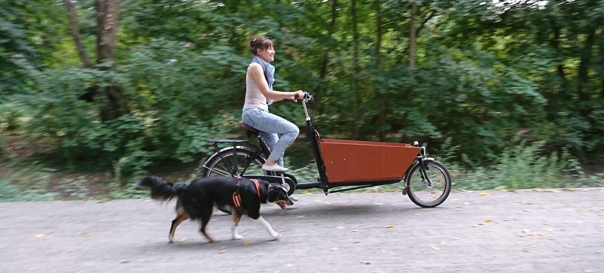 Hund laeuft am Lastenrad Bakfiets
