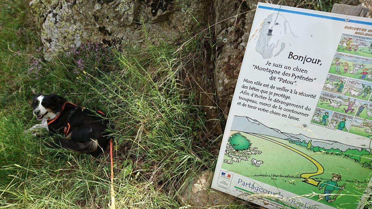 Hinweisschild am GR10 bei Begegnungen mit Herdenschutzhunden