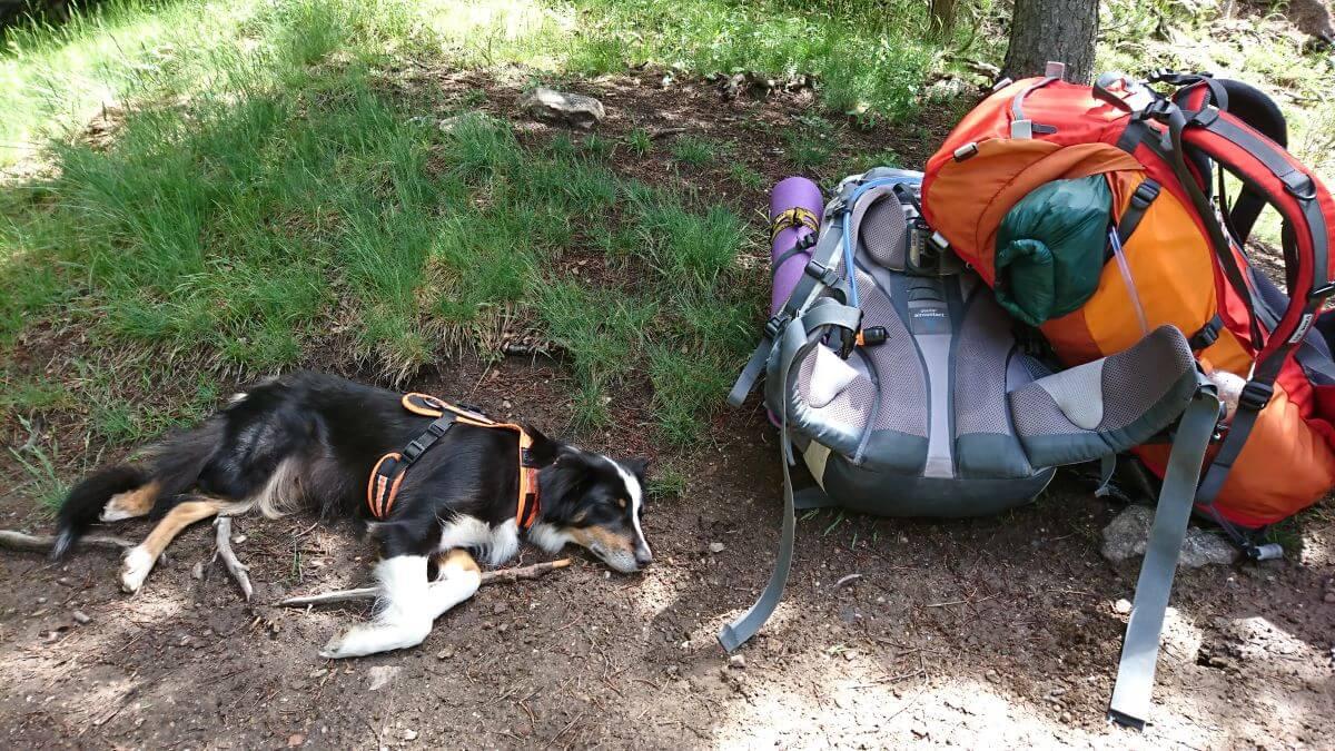 Pause auf dem GR10 Hund schläft neben den Rucksäcken
