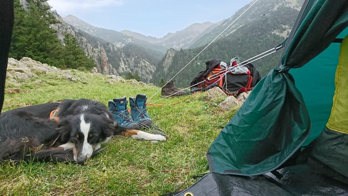 Wandern mit Hund auf dem GR10 Hund vor dem Zelt